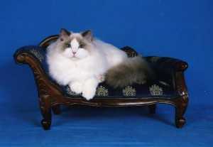 katers-puccini-004