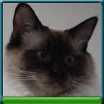 profile_Loki