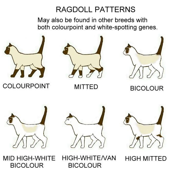 Ragdoll patterns
